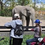 zoo slon karta