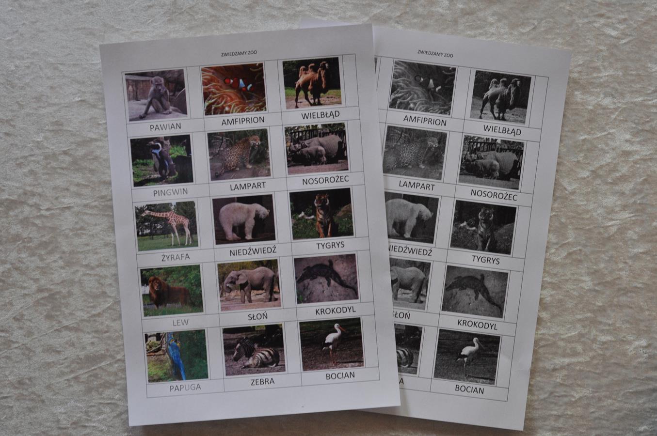 zwierzęta zoo