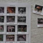 karta zoo