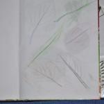 zielnik liście odrysowane