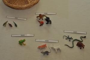 gromady kregowcow figurki i napisy