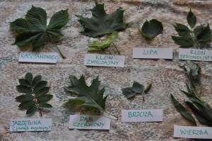 liście drzew z podpisami