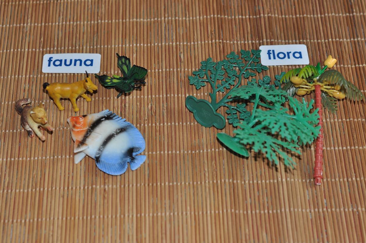 Flora i fauna dla dzieci