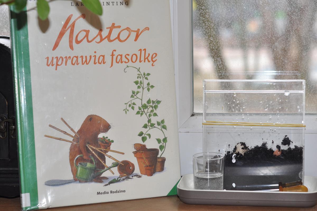 Kastor uprawia fasolkę