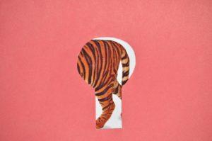 tygrys przez dziurke od klucza