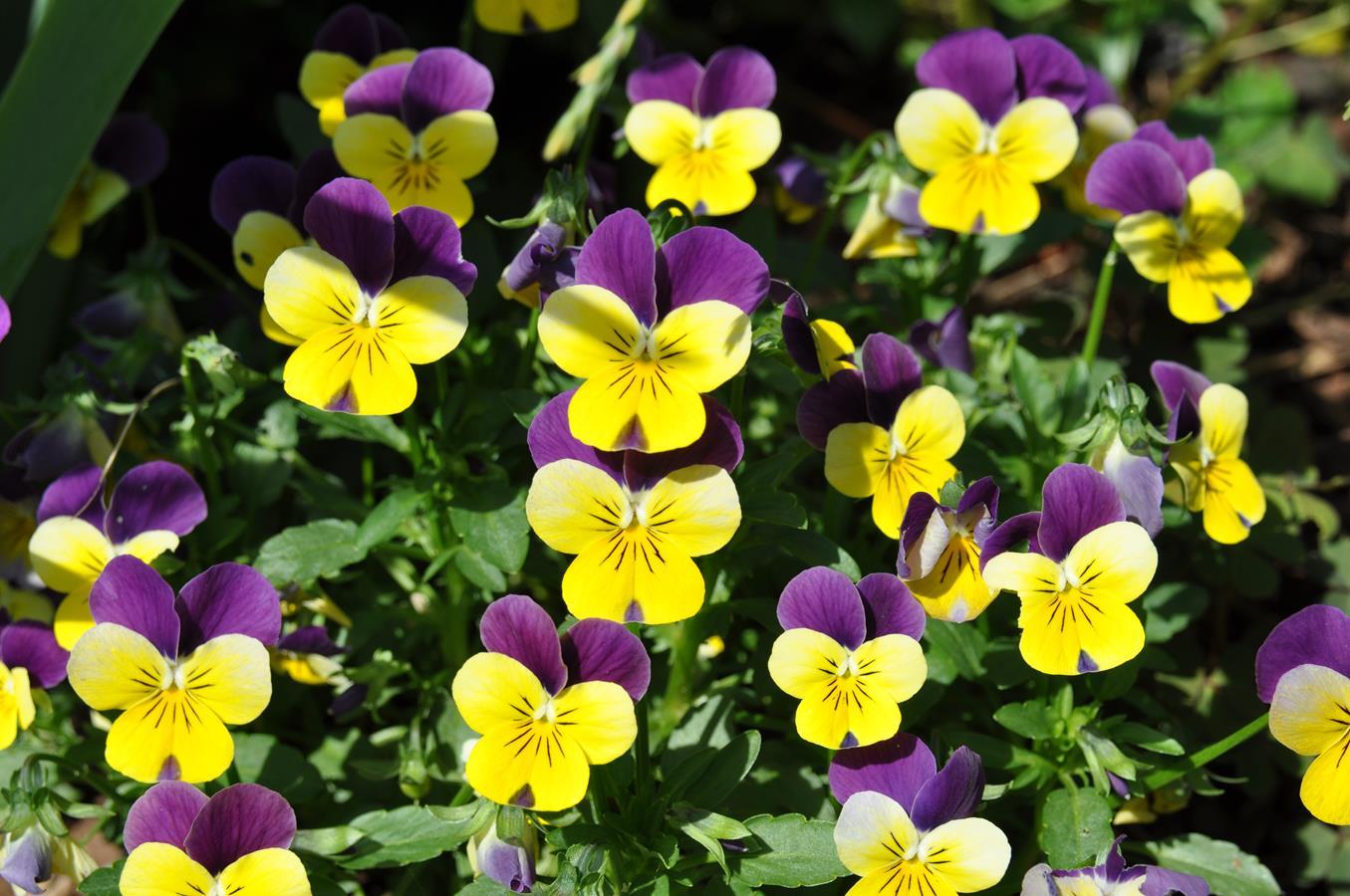 Wiersz o kwiatach